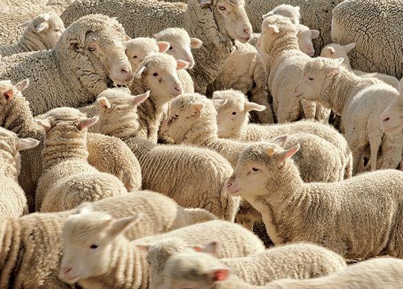 loro piana wool fashion design tuscany florence