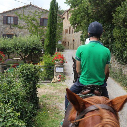 casteluccio-di-trinoro-cavallo